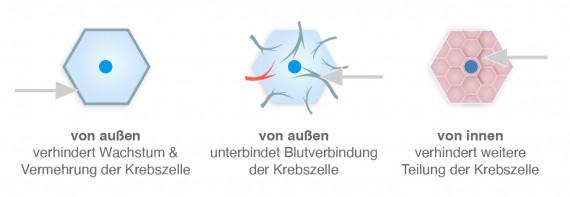 Wirkungsweisen der Antikörpertherapie