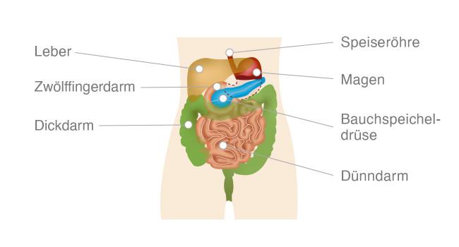 Bauchspeicheldrüse Infografik
